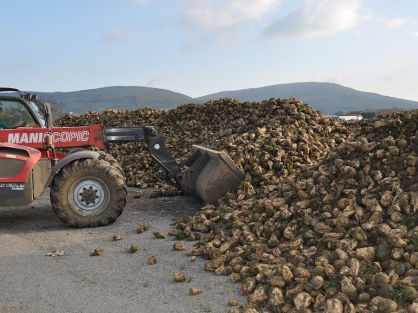 Pestovatelia cukrovej repy očakávajú pomoc od štátu