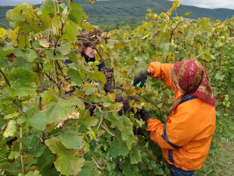 Ostatné roky prajú kvalite slovenských vín