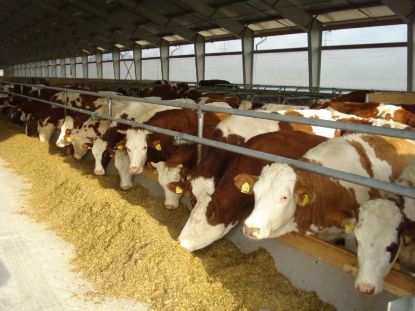 Welfare je návratom k prirodzenému prostrediu zvierat. Veľké farmy v tom nezaostávajú