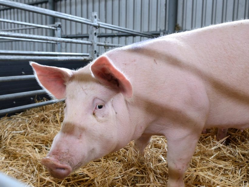Kaufland: Ponuku slovenského mäsa budeme rozširovať podľa možností dodávateľov