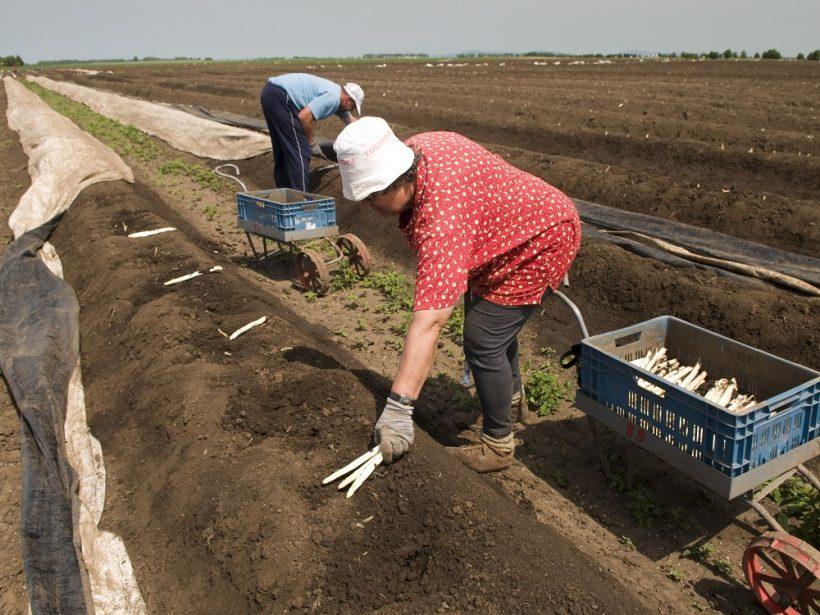Europol pomohol štátom EÚ pri akcii proti vykorisťovaniu ľudí v agrosektore