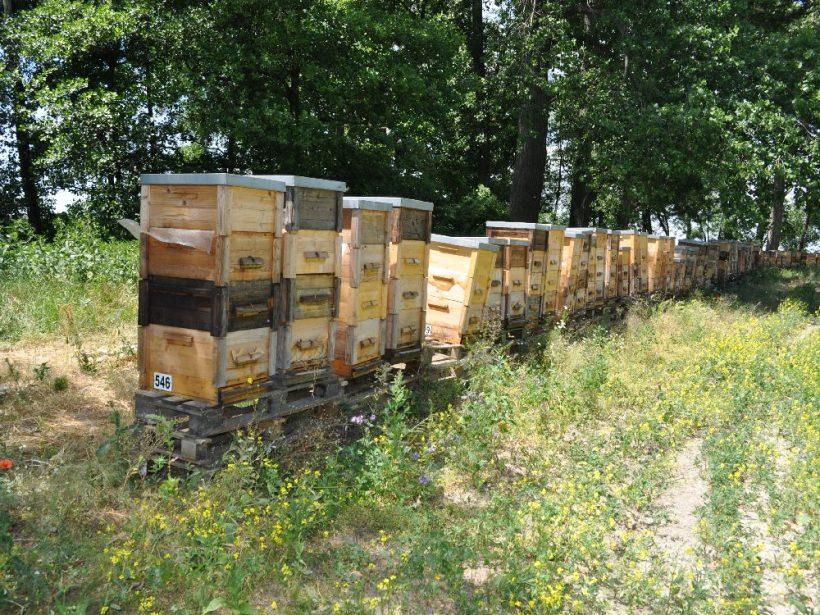 Včelári hodnotia rok ako lepší, no o výnimočných výsledkoch nehovoria
