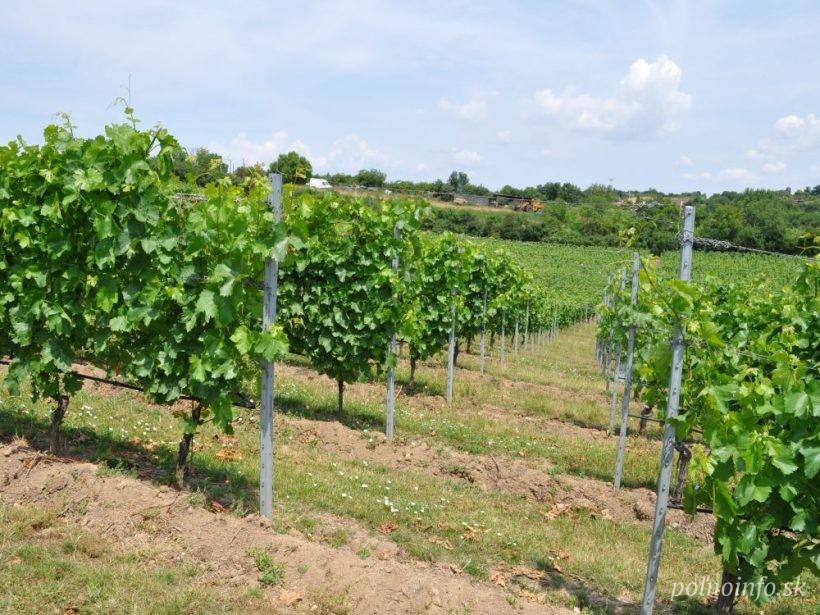 Nateraz môžu získať časť poistného len vinohradníci