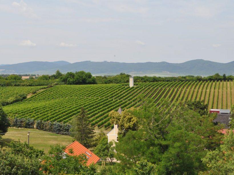 Kvíz: Vinohradníctvo a vinárstvo na Slovensku