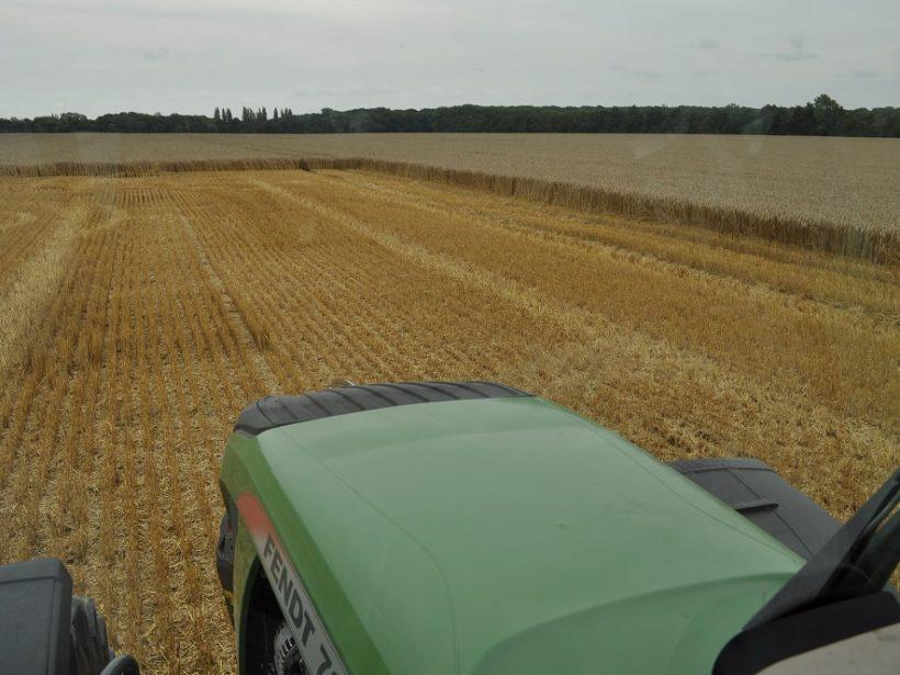 Dolný Zemplín: Poľnohospodári hlásia priemernú úrodu, dôvodom sú silné búrky
