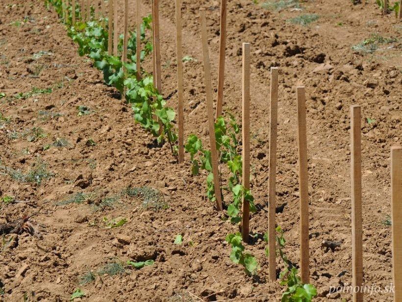 Budú peniaze na projekty pozemkových úprav? Agrorezort uvádza, že ide o menej dôležitú úlohu