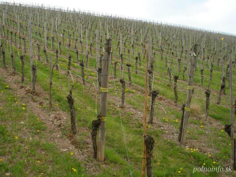 Po slabom roku 2017 sa produkcia vína vlani zvýšila takmer o pätinu