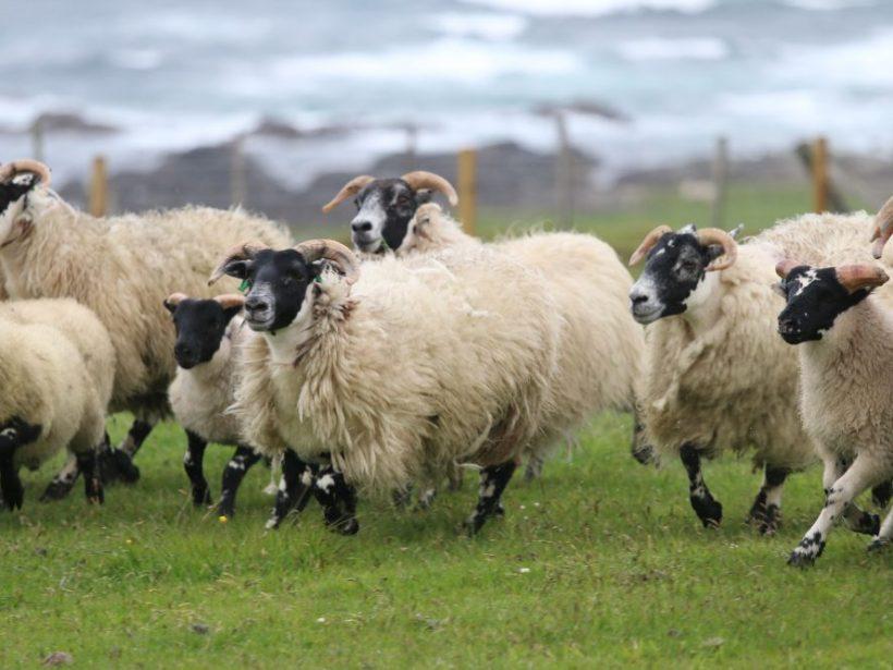 Kvíz: Ovečka, ovečka trojaký úžitok