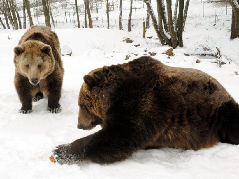 Francúzski starostovia na proteste žiadali odstránenie medveďov z Pyrenejí