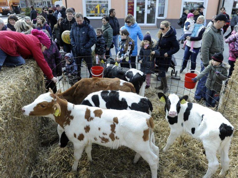 V Bánovciach nad Bebravou potečie slovenské mlieko potokom