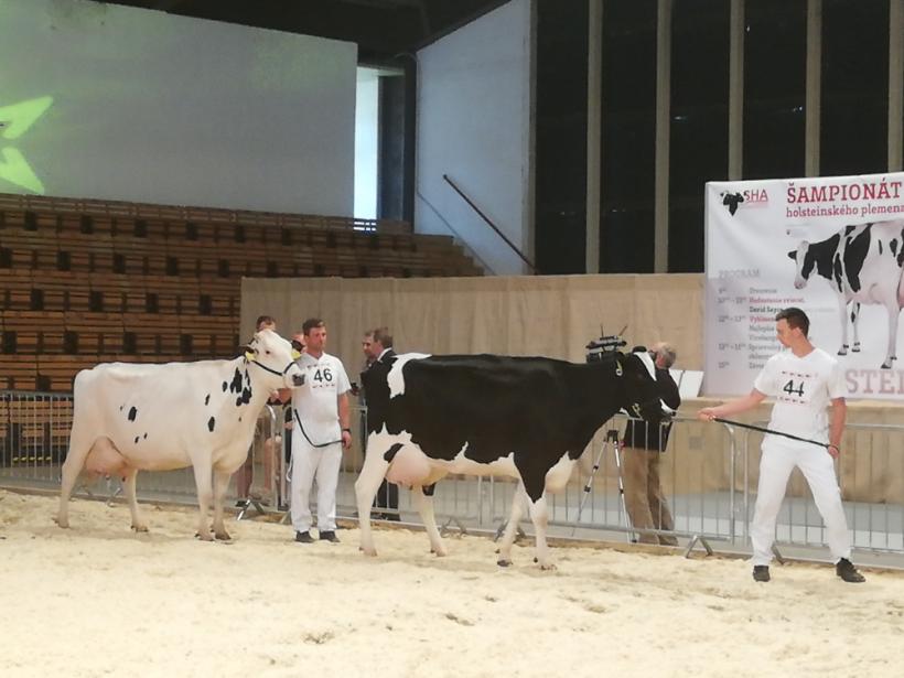 Holsteiny sa po rokoch predstavili na nitrianskom výstavisku