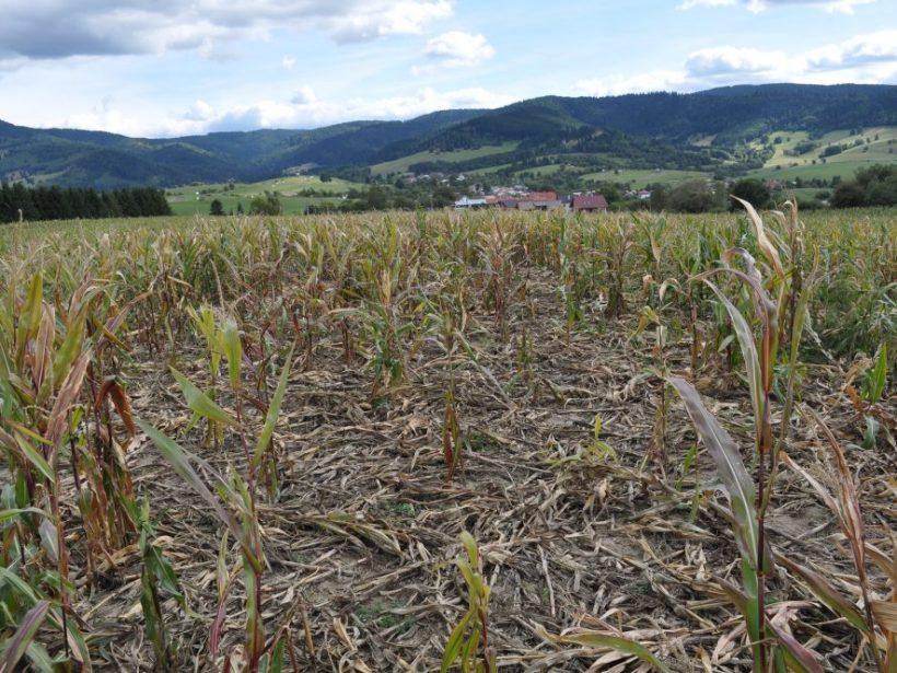 SPPK: Škody na plodinách spôsobených počasím a zverou dosiahli vlani 50 mil. eur