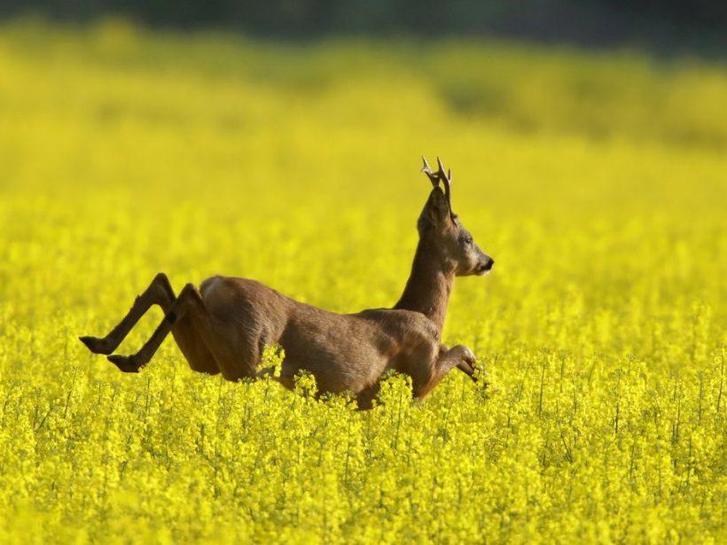 Za päťdesiat rokov poklesla populácia živočíchov na svete o 68 percent!