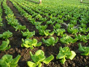 Desiatky miliónov do ošípaných, hydiny alebo zeleniny môžu zmazať stomiliónové saldá