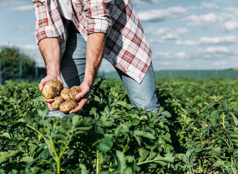 Kaufland hľadá regionálnych dodávateľov potravín aj počas krízy