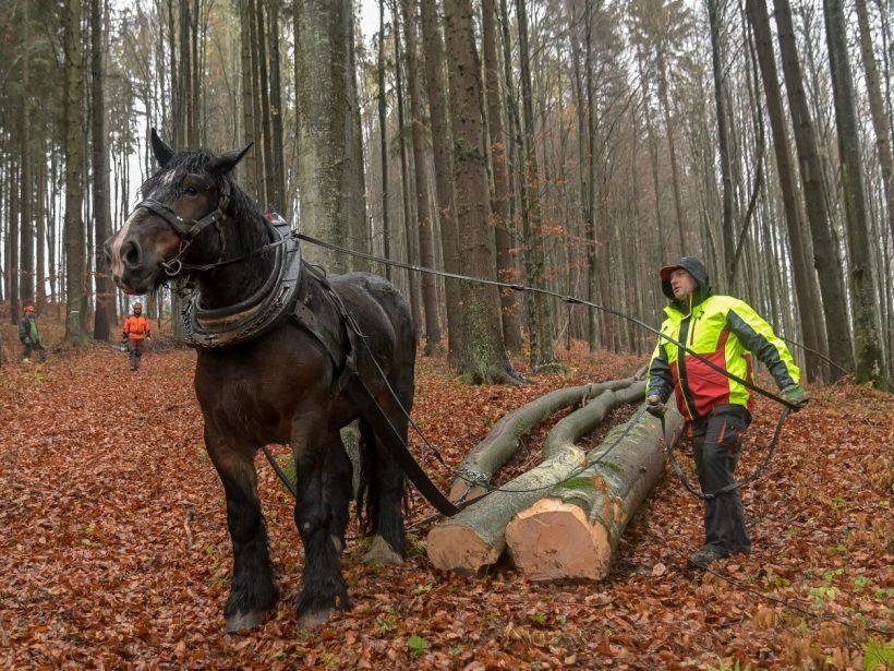 Mimovládne organizácie žiadajú celoročnú ochranu vlka na Slovensku