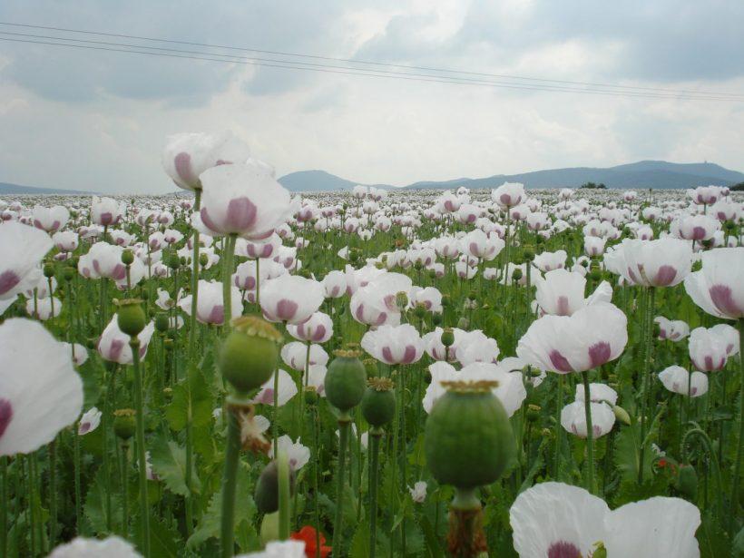 Vzťahy pri prenájme pozemku sa upravia, plénum schválilo novelu zákona