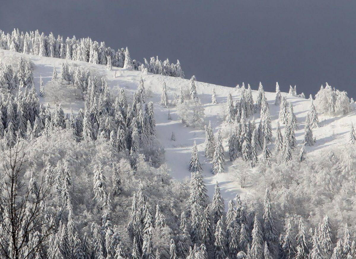 Výmera lesov na Slovensku predstavuje 41 % územia, z roka na rok rastie