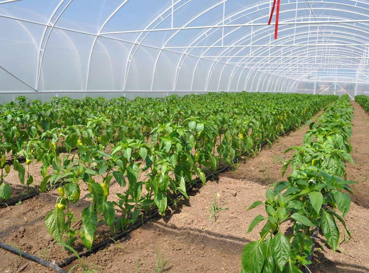 Rozpočet PRV posilní o 163 miliónov eur. Pomôžu agropotravinárom peniaze aj pri boji s Covid?