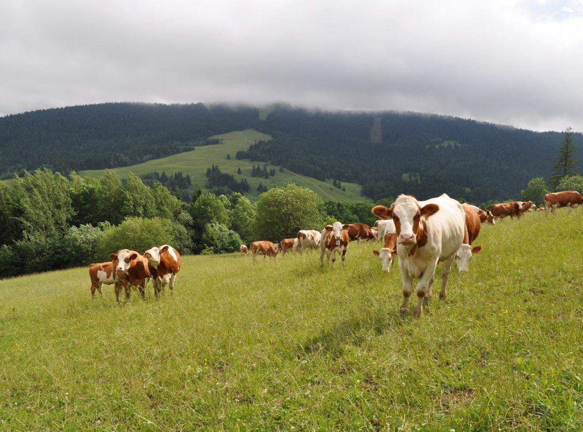 Agrorezort spúšťa podávanie žiadostí na platby pre chovateľov hospodárskych zvierat