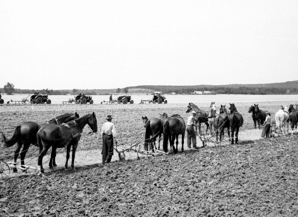 O pôde a nepriamej likvidácii roľníkov