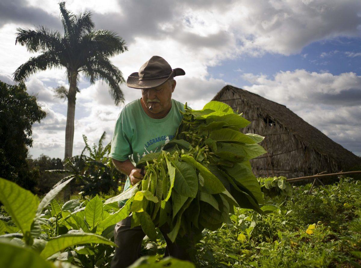 Začína významná reforma kubánskeho poľnohospodárstva