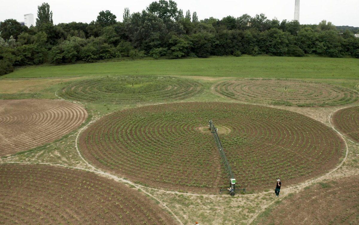 Dvanásť kruhov pretvorilo pasienky na zeleninovú farmu