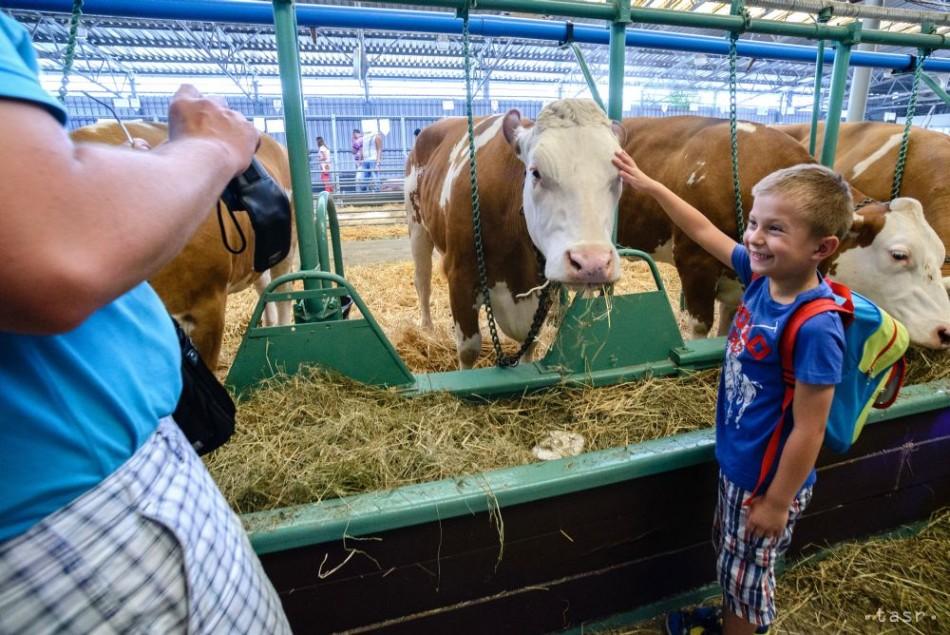 Nitrianske výstavisko zrušilo augustový Agrokomplex
