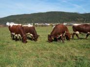 Slovensko vyprodukuje najviac mlieka na farme